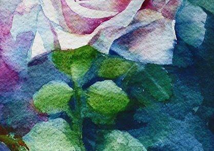 rosa 11