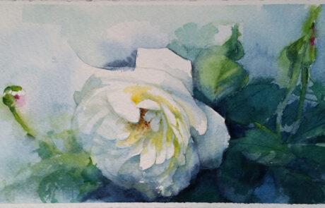 rosa 6 acquarello 70x25
