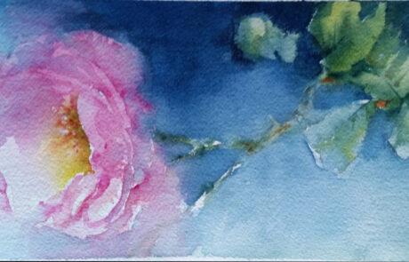 rosa 8 acquarello 30x20