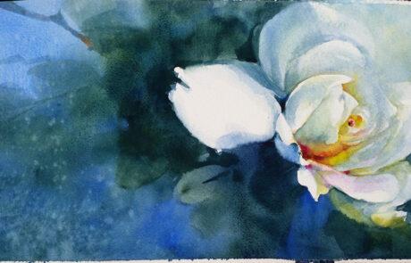 rosa bianca acquarello 30x70